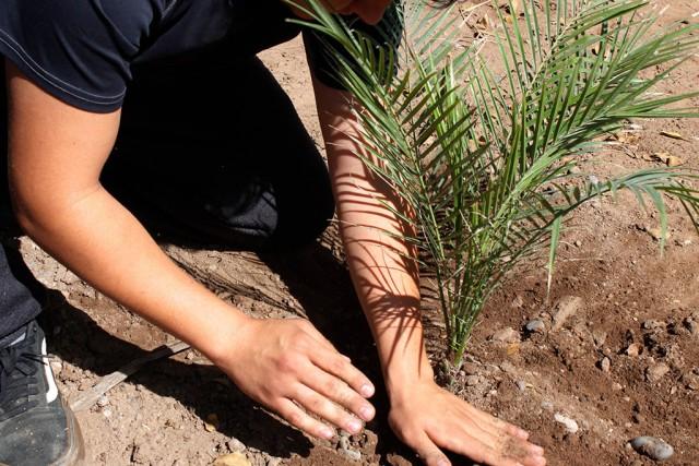 Japac-noticias-reforestamos-el-centro-de-integracion-juvenil-dentro-de-las-acciones-por-el-dma-07